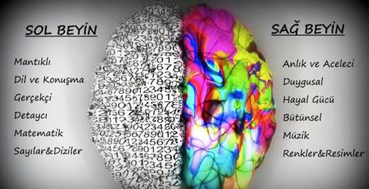 Sağ Beyin - Sol Beyin